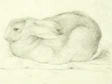 Study of the 'real' Peter rabbit